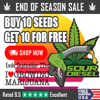 300x250 endofseason-sourdiesel